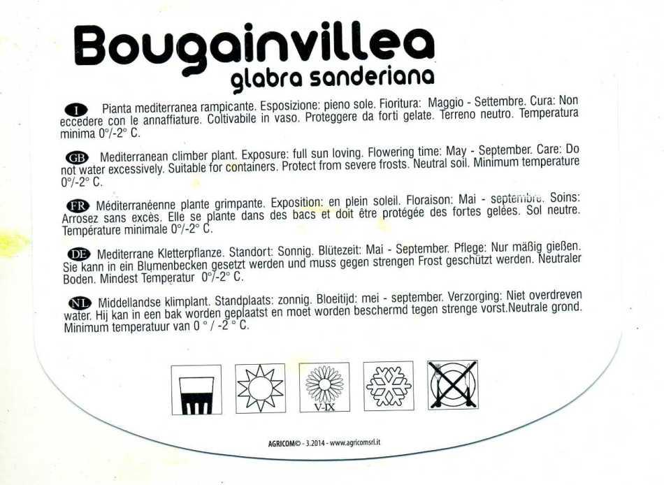 BOUGAINVILLEA3309