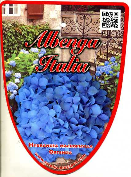 albenga3416