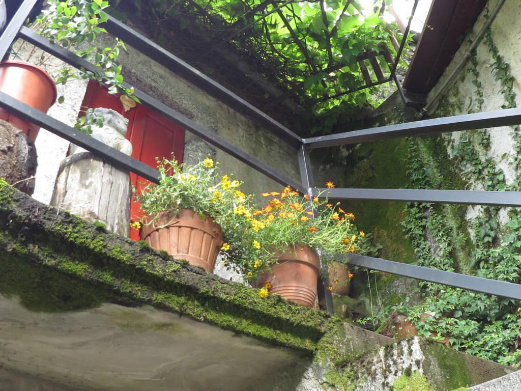 Piante Wallace : Bidens pianta erbacea perenne ma che viene coltivata come