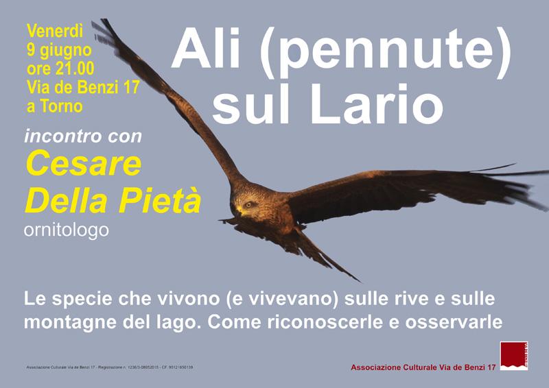 9 giugno-Ali - pennute - sul Lario