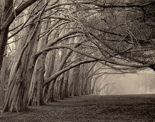 """""""The Nature Of Trees"""" by Paul Kozal"""