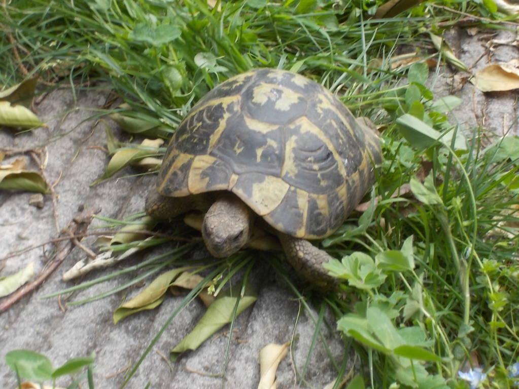 La rinascita annuale delle tartarughe 7 aprile 2018 for Lago per tartarughe