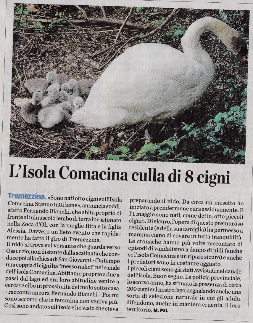 CIGNI COMACINA3068