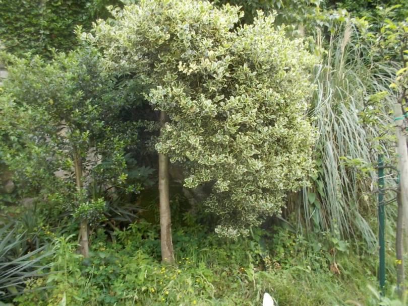 DSCN9949 (FILEminimizer)