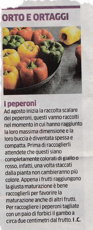 PEPERONI3307