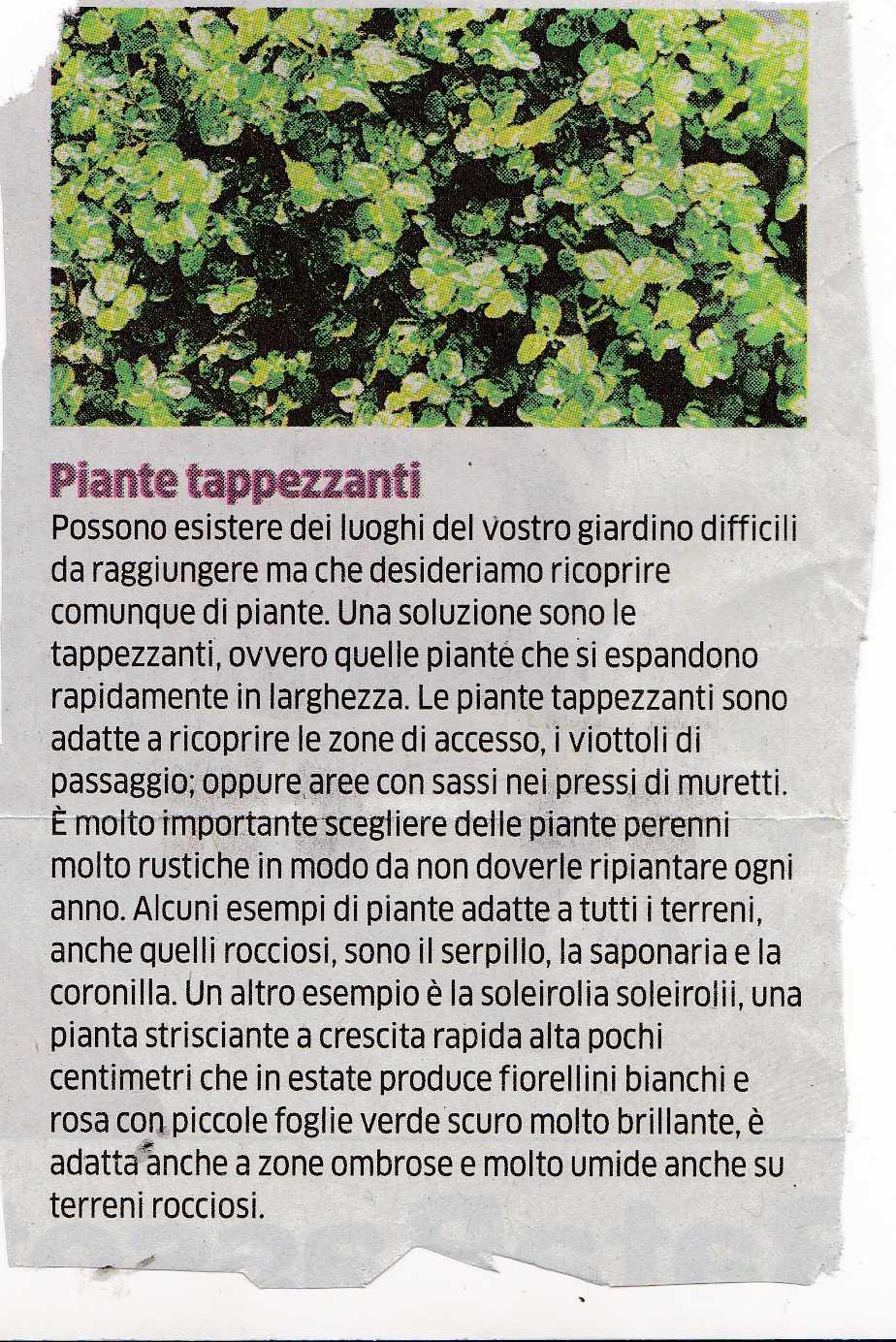 piante tsappezzanti3457
