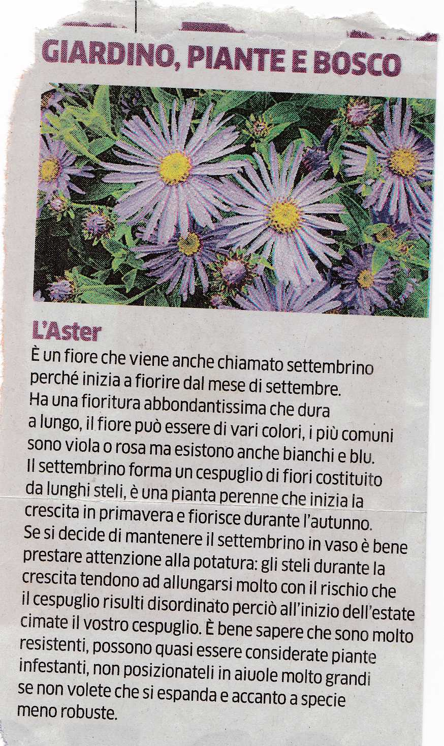 aster3577