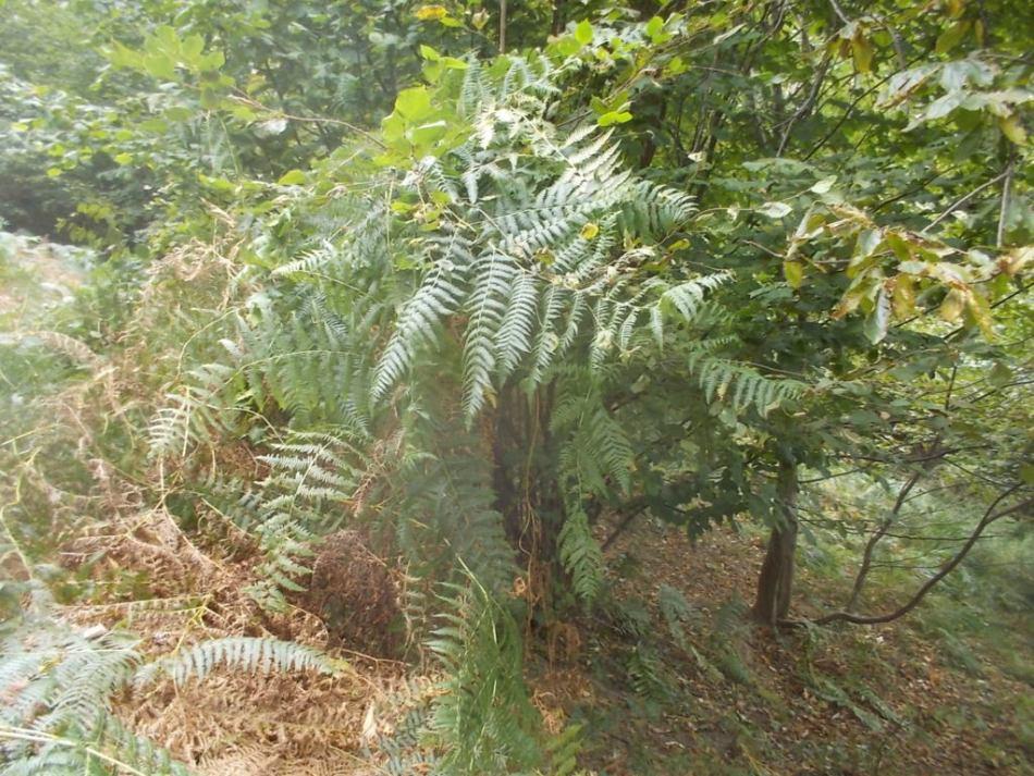 DSCN0939 (FILEminimizer)