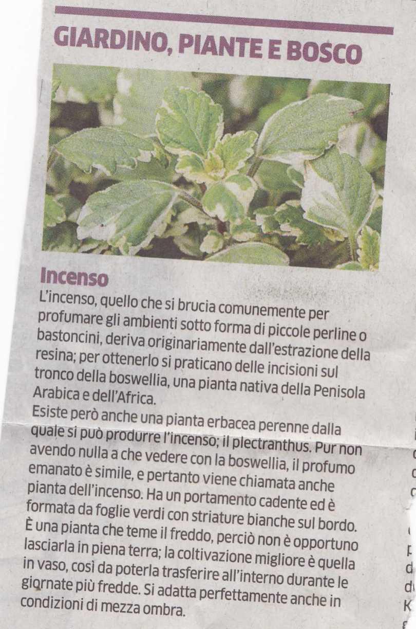 incenso3761