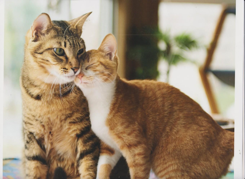gatti amano428