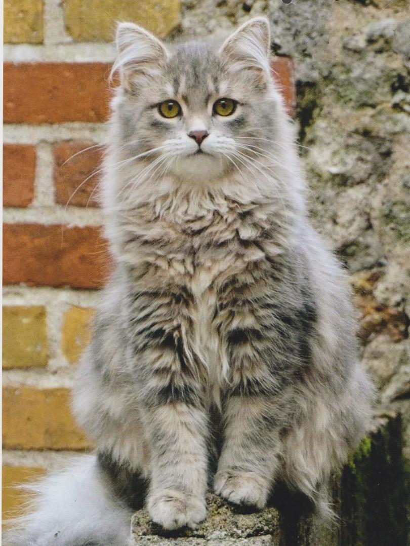 gatti amano429
