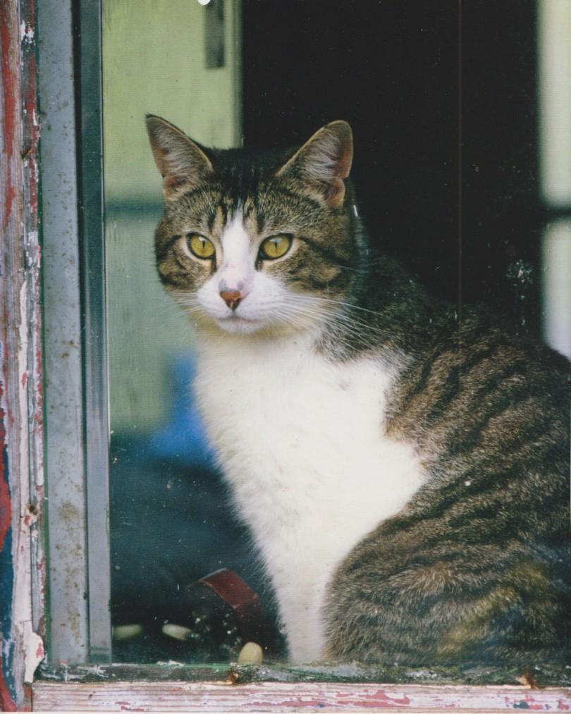 gatti amano430